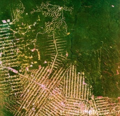False-colour satellite image of humans moving into rainforest space in Brazil. The colours have been chosen to highlight the destruction of the rain forest: the dark green of the natural forest contrasts the pale green and pinks of levelled forest. Credit: NRSC Ltd / Science Photo Library
